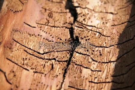 legno sentire corteccia passeggiate parassiti infestanti
