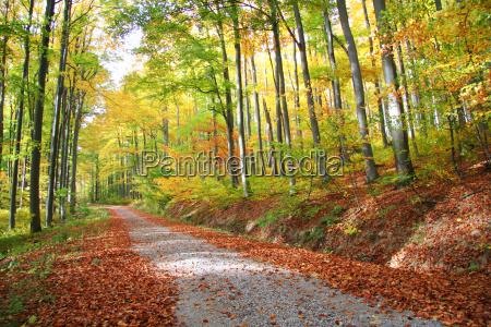 dautunno strada forestale no 1