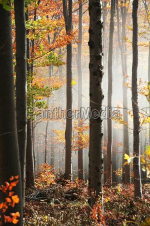 no nebelwald 2