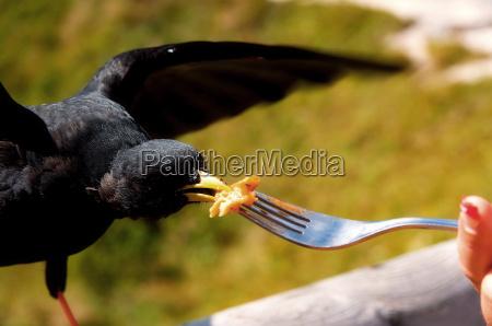 mano foraggio montagne uccello uccelli penne