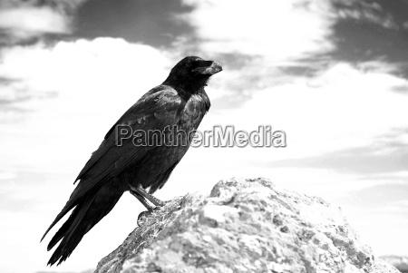 storia pietra sasso animale uccello austria