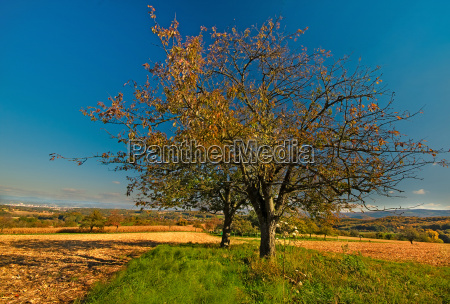 francia alsazia sguardo vista ottobre autunno