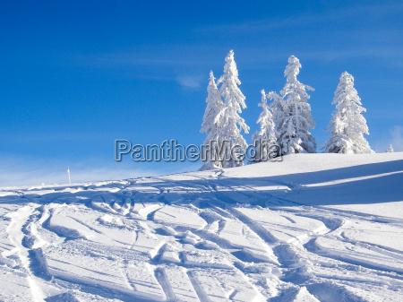 luce albero alberi nevoso inclinazione tendenza