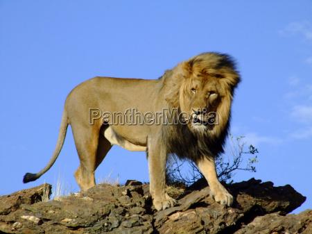 re degli animali 3