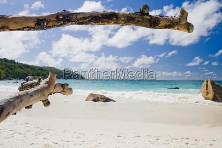 vacanza vacanze tronco riva del mare
