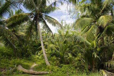 trail attraverso la giungla