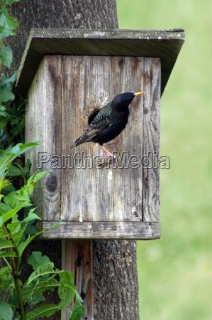 brutnidodi nidificazionescatola di nidificazionecasa degli uccellistellauccellouccelligli