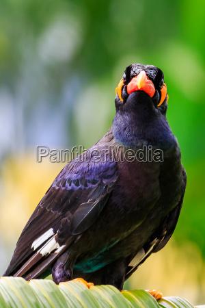volo animale uccello selvaggio nero uccelli